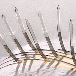Team's E-Whiskers May Be a Touchstone for Future of Electronic Skin